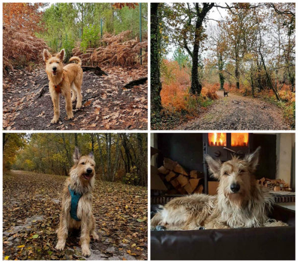 Picards im Herbst